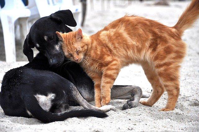 czy warto mieć zwierzęta